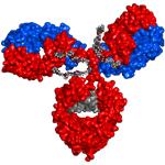Biopromoind Antibody 3D
