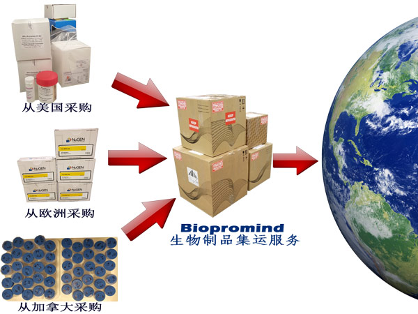 Biopromind Consolidation Service in Chinese